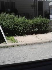 free hedges