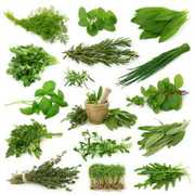 Medicinal herbs for improve impotency and stress, joint pain
